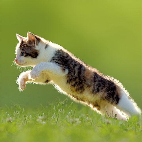 Catterina Cat Litter