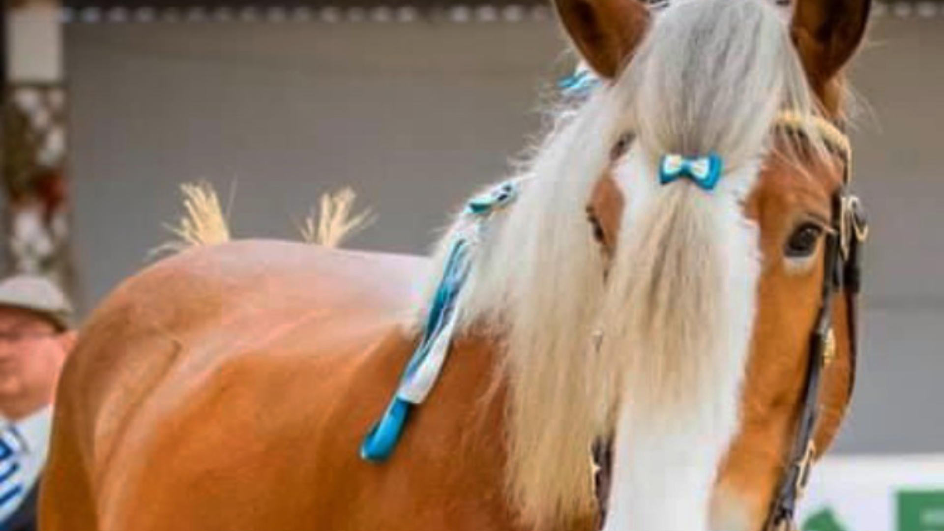 The Clydesdale Breed